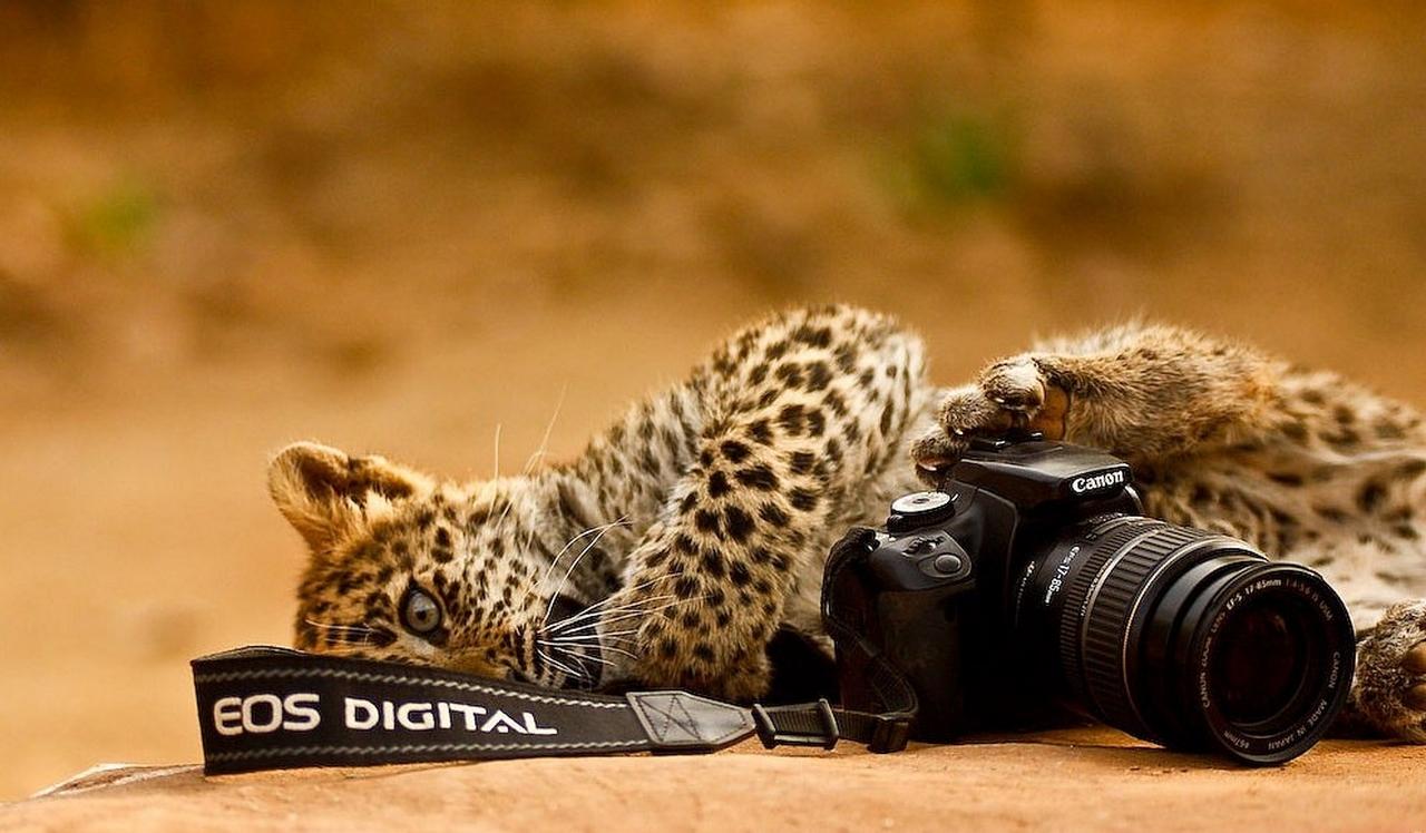 животные техника Tamron фотоаппарат animals technique the camera без смс