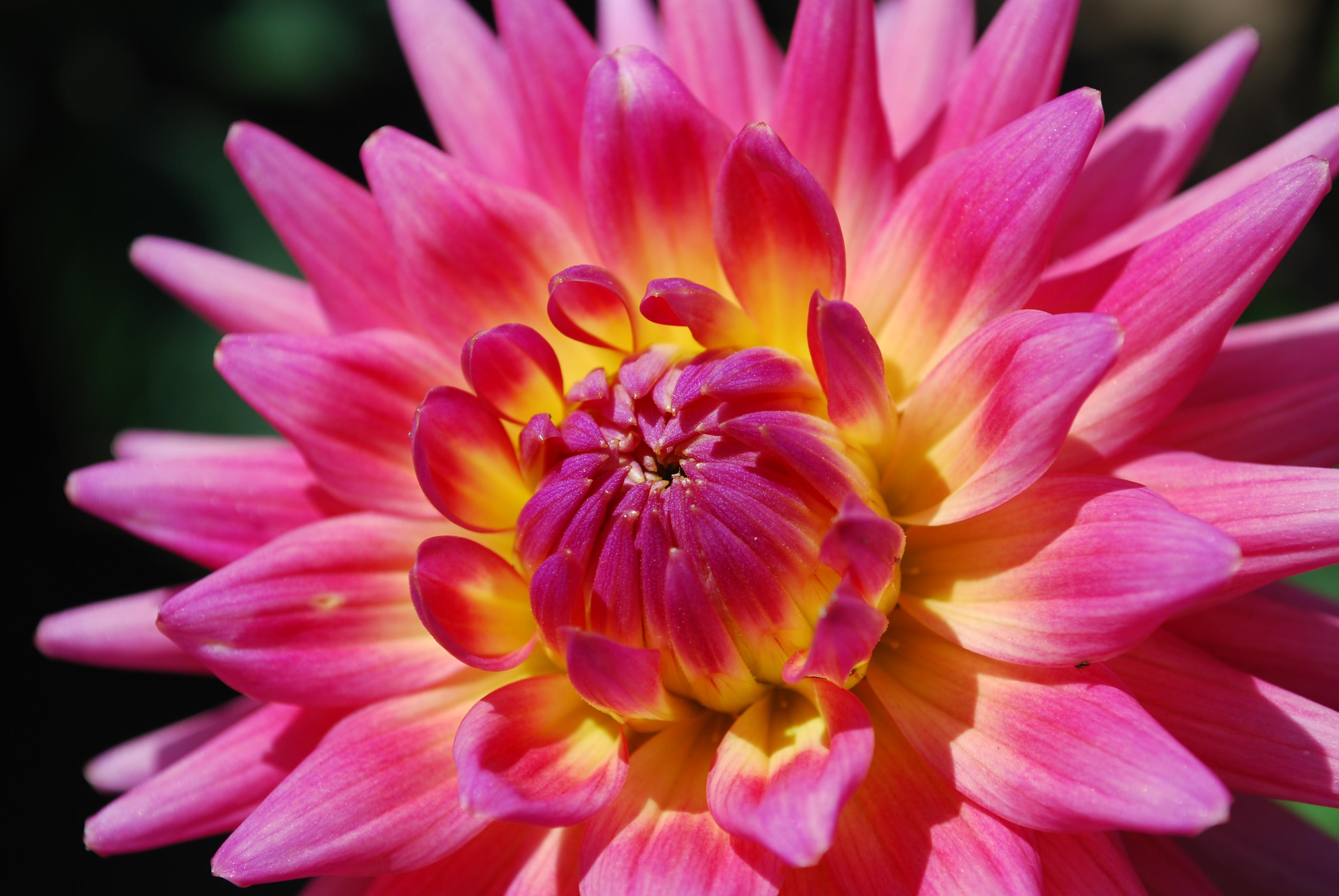 Japanese Garden Flower by Nho Desktop Wallpaper