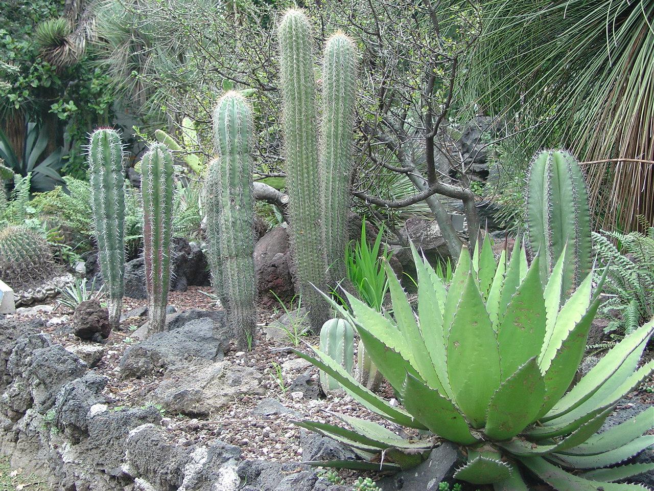 Jard n botanico unam by universidad nacional aut noma de Jardin botanico de la unam