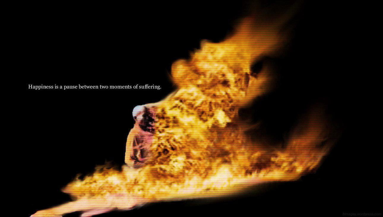 buddhist monk on fire wallpaper wwwpixsharkcom