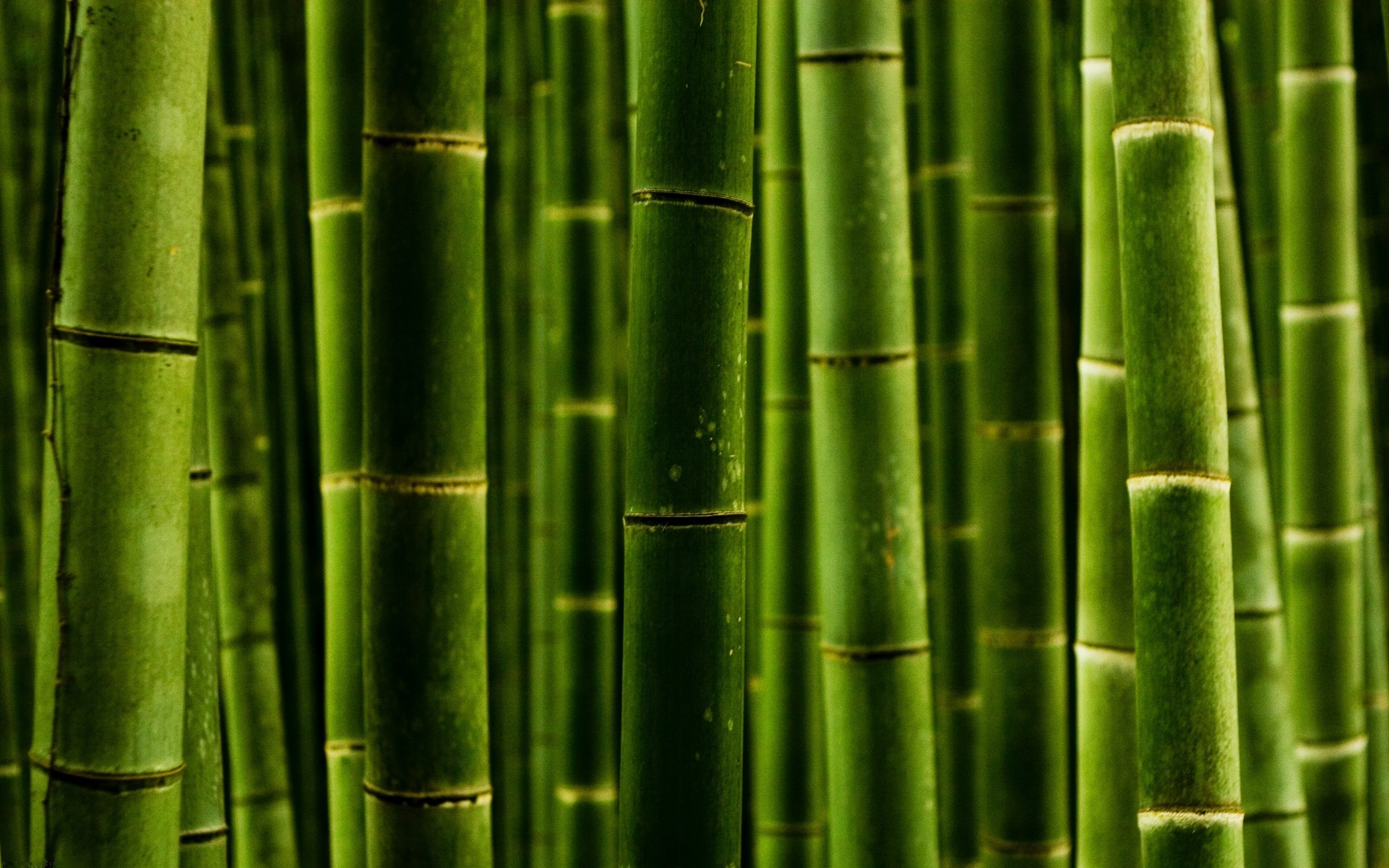 abstract backgrounds wallpaper bamboo - photo #5