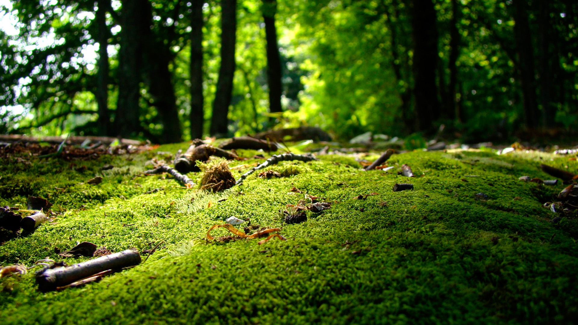 Moss By Maashu  Desktop Wallpaper