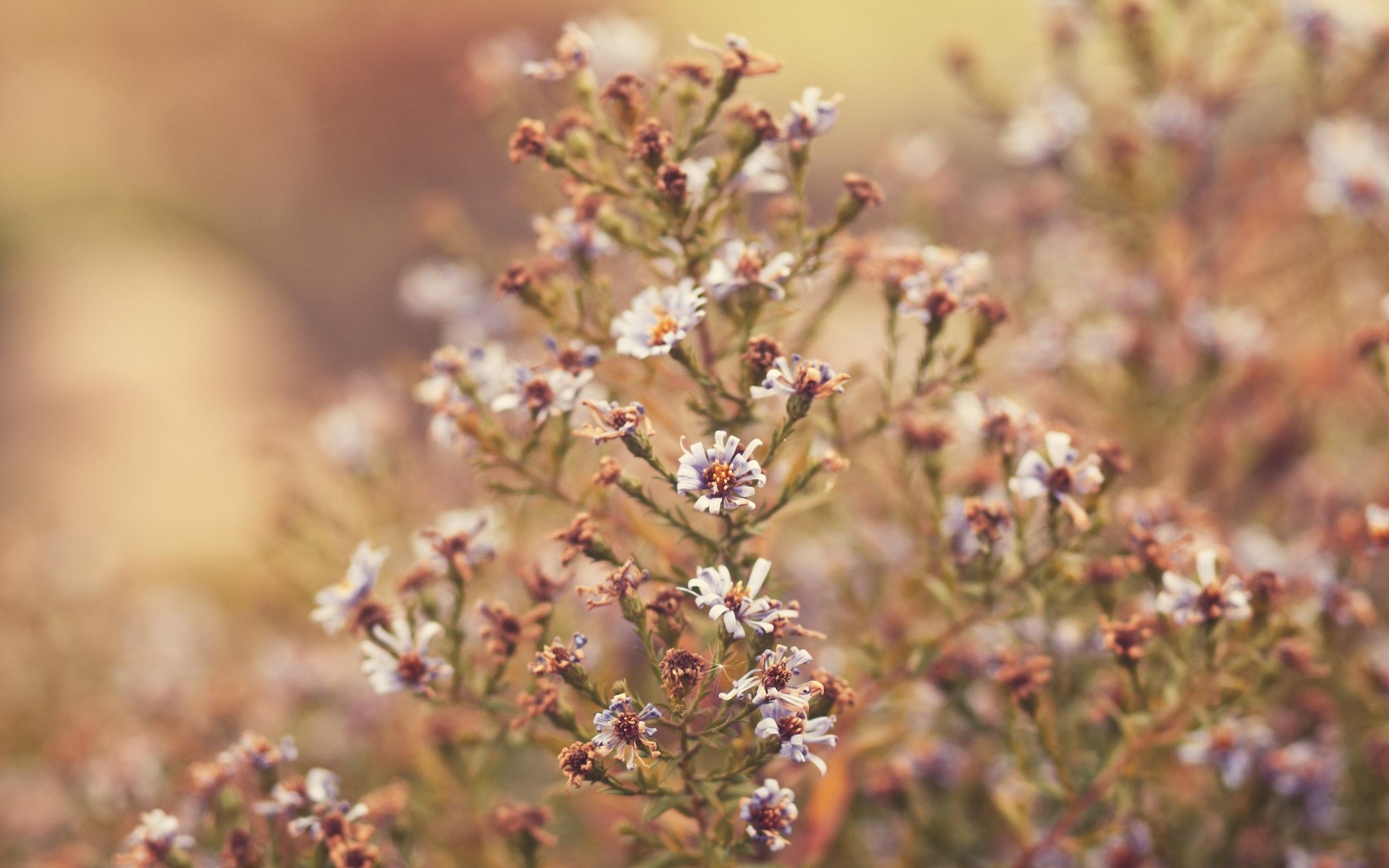 autumn flowers - desktop wallpaper