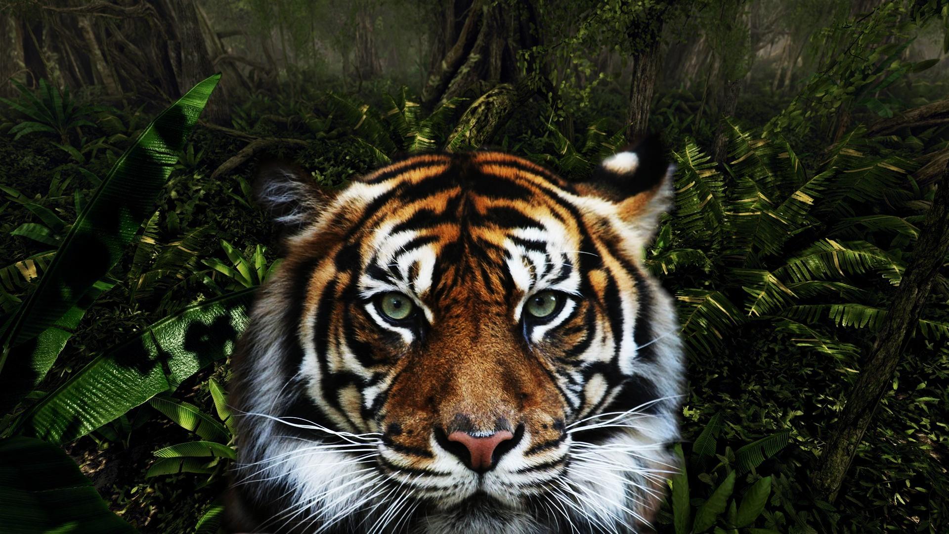 тигры поле лето без регистрации