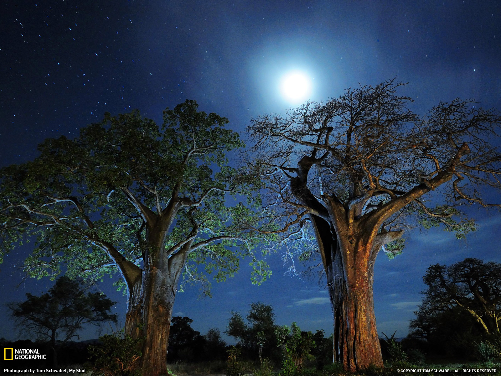 Baobab trees tanzania by national geographic desktop for Beaux arbres de jardin