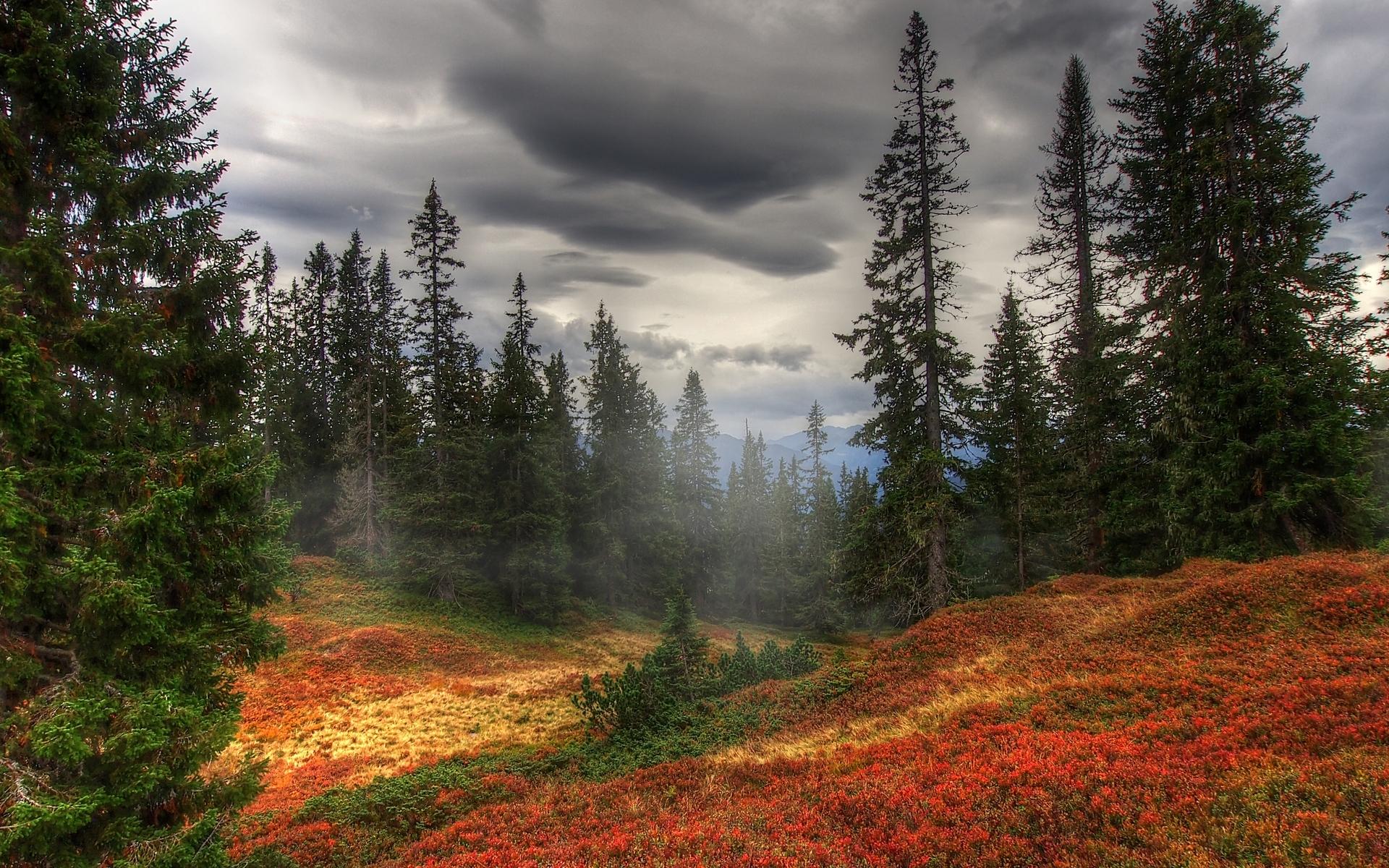 forest backround