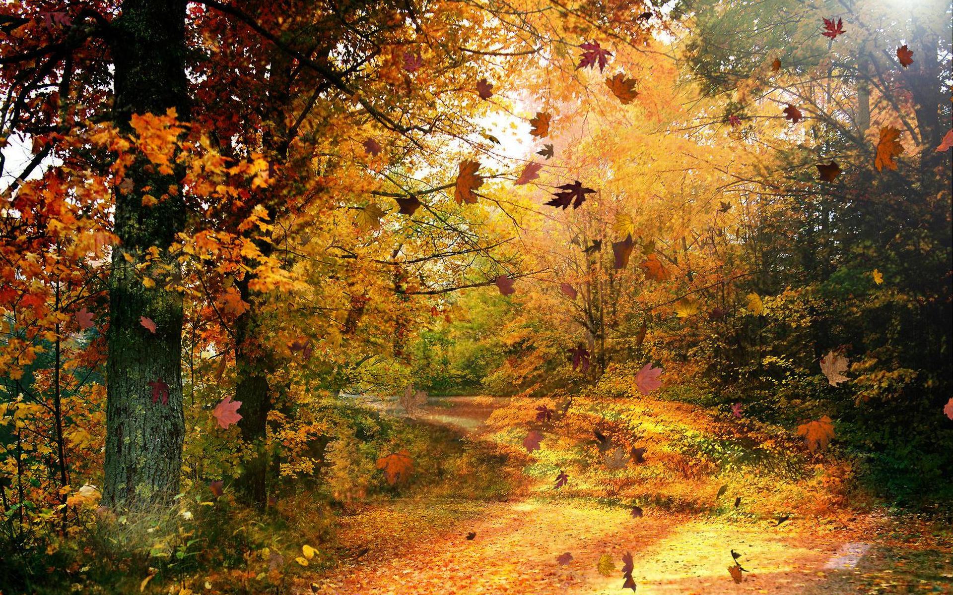 Rezultat slike za autumn wind falling leaves