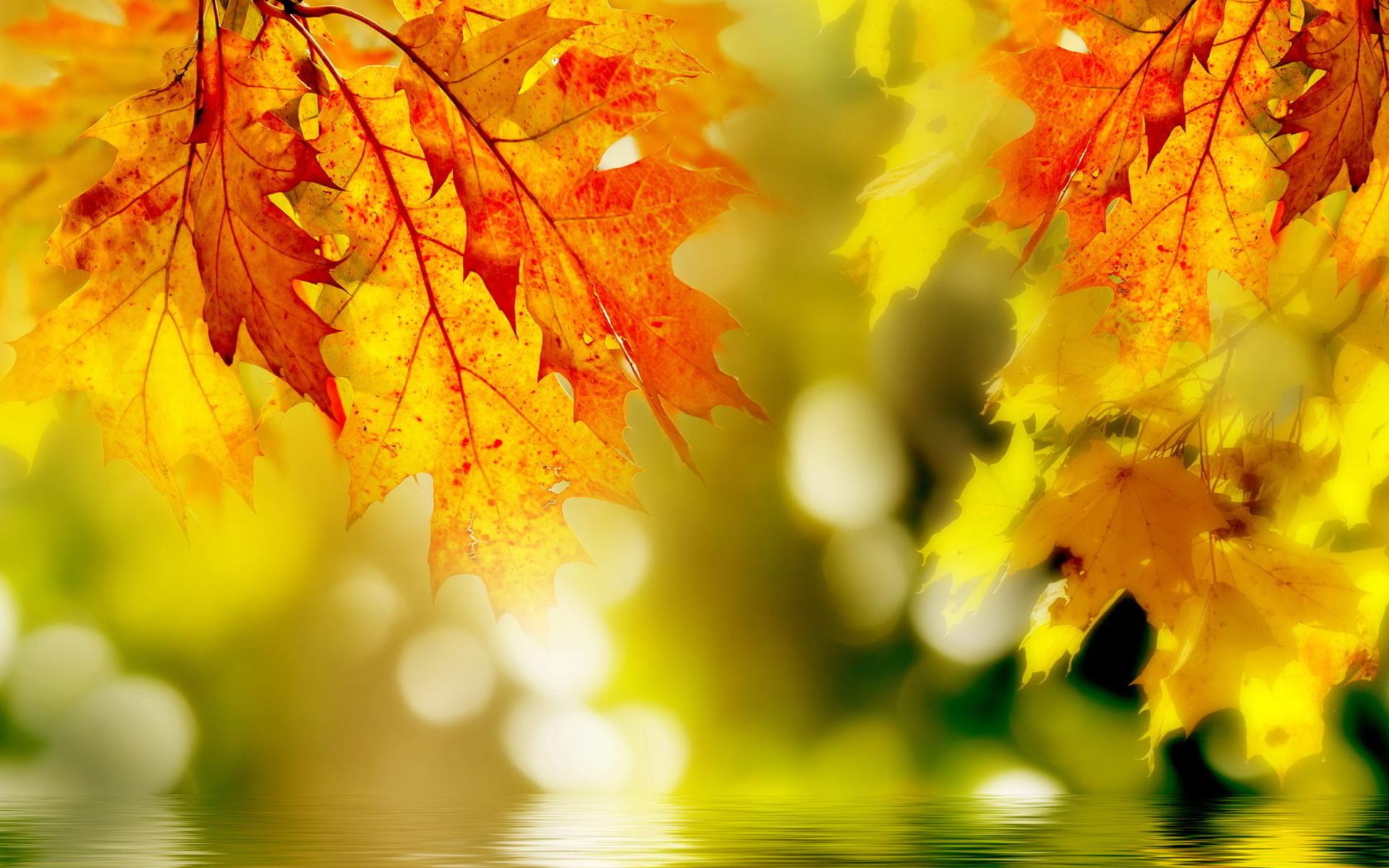Autumn Relief By Designcrown