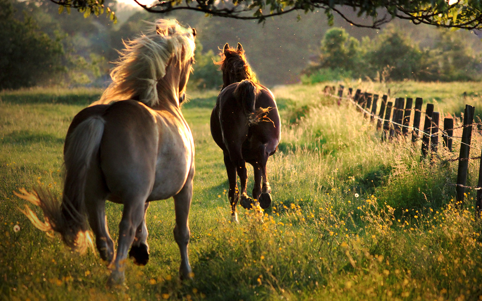 Fence Line Jaunt By Equine-hourglass