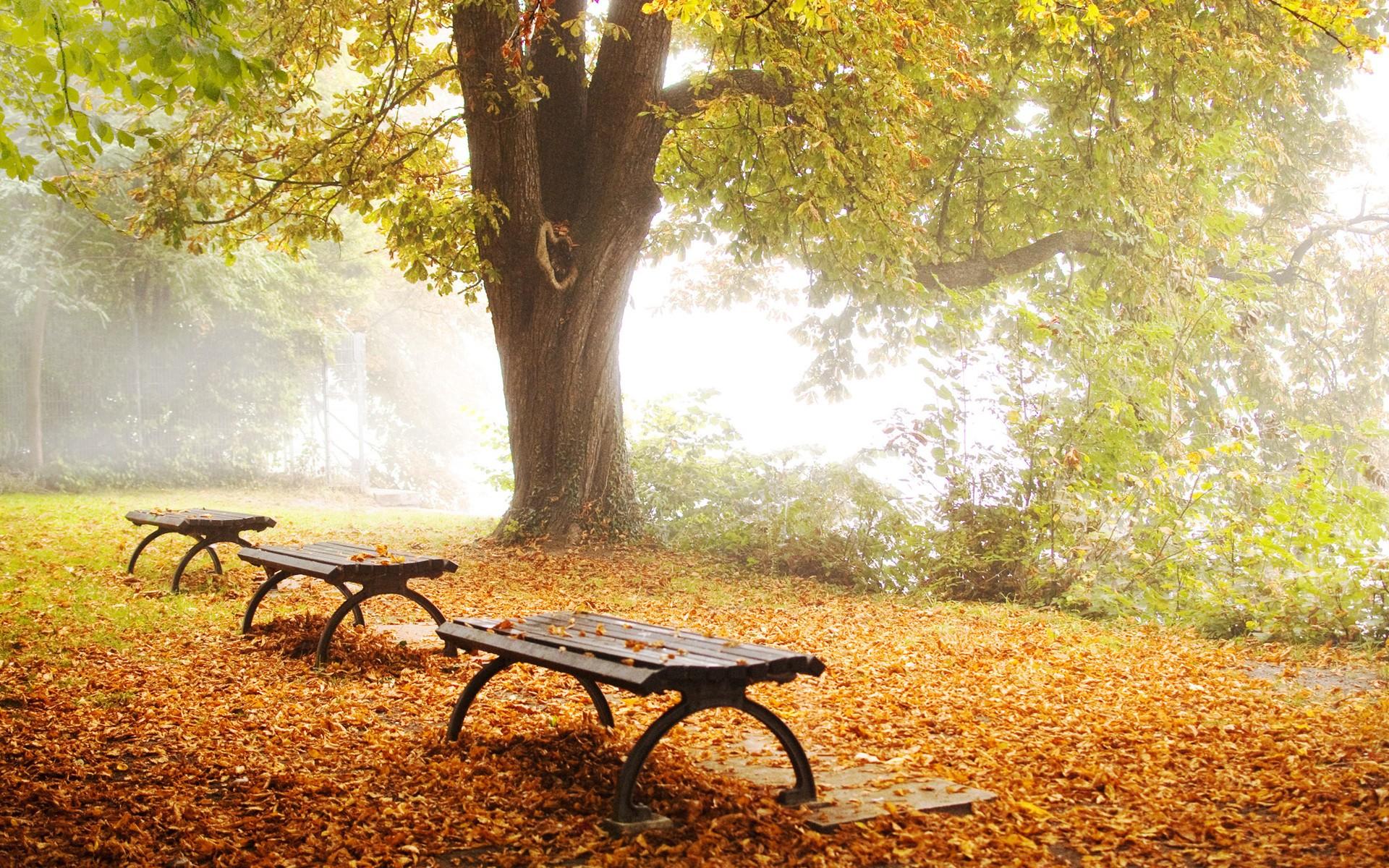 beautiful fall scenic view - photo #24