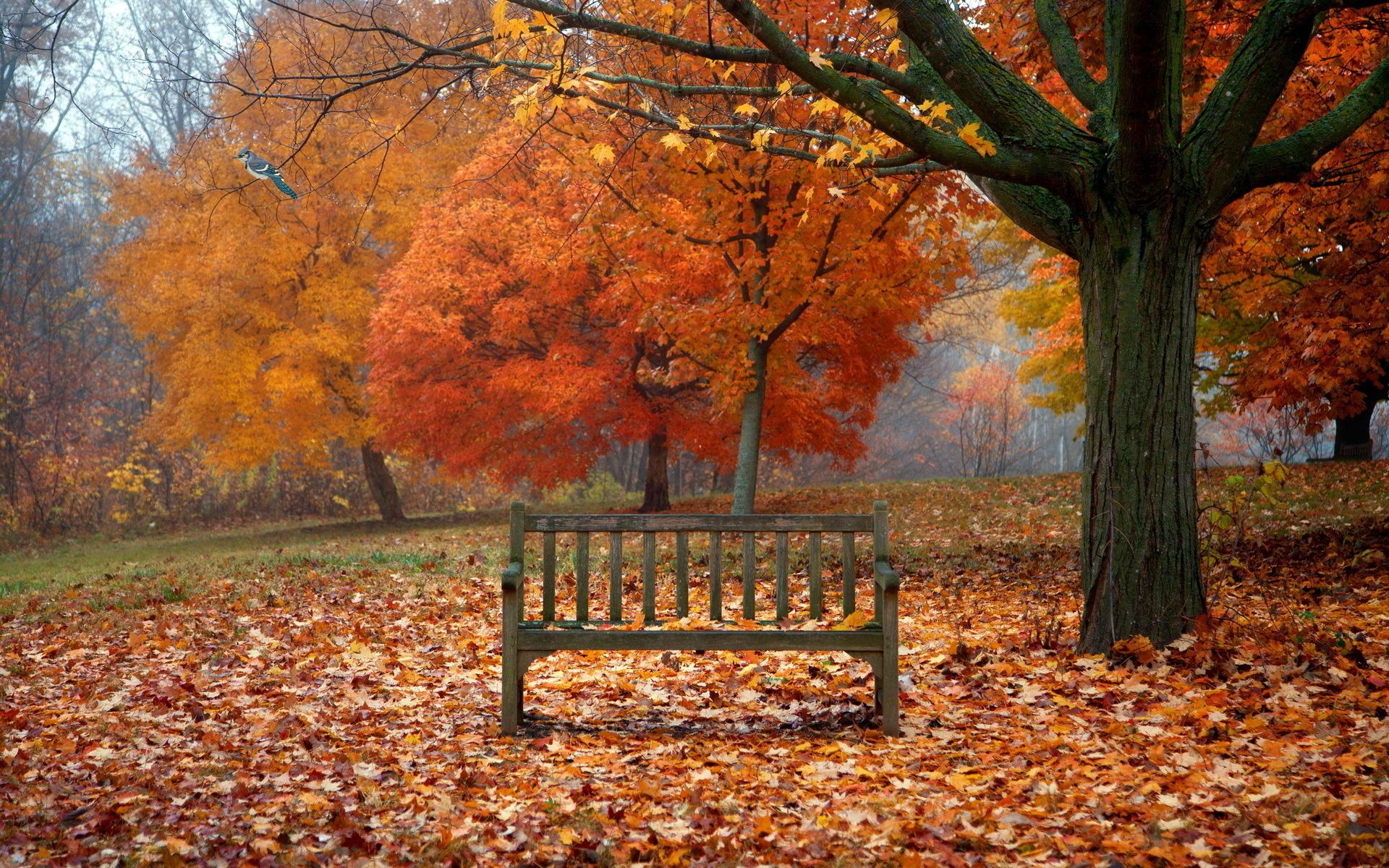 scenes of autumn desktop wallpaper