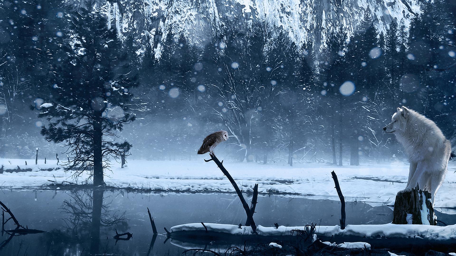 winter interlude - Desktop Wallpaper