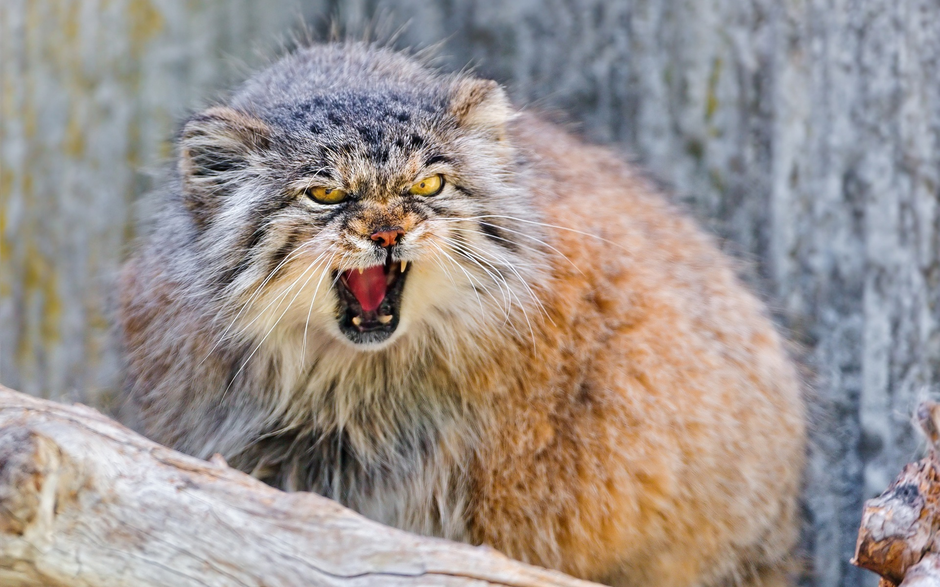 angry animals wallpapers - photo #19