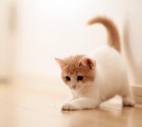 Kittens Wallpaper Desktop Wallpaper Social Wallpapering
