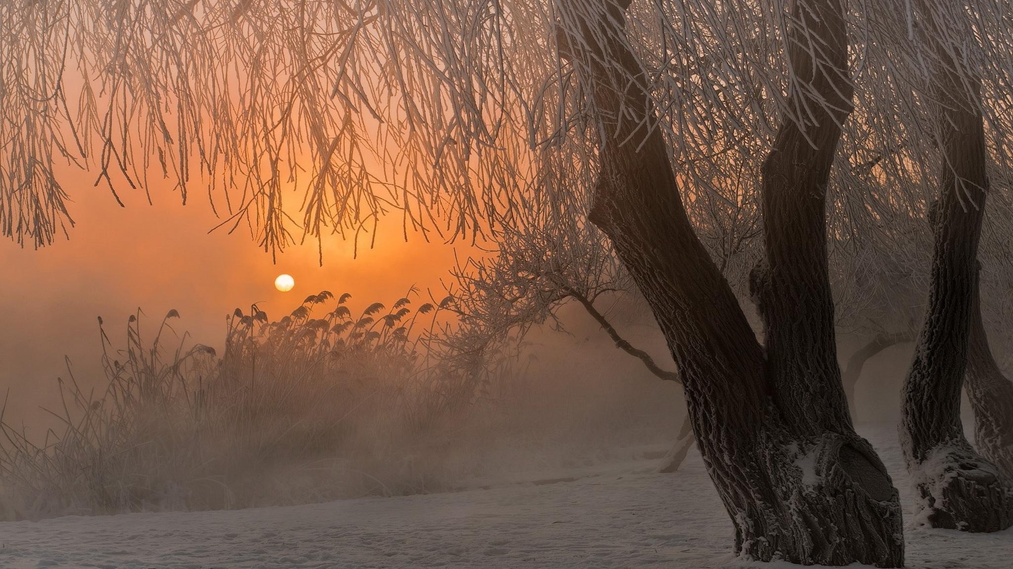 заснеженные деревья на закате в хорошем качестве
