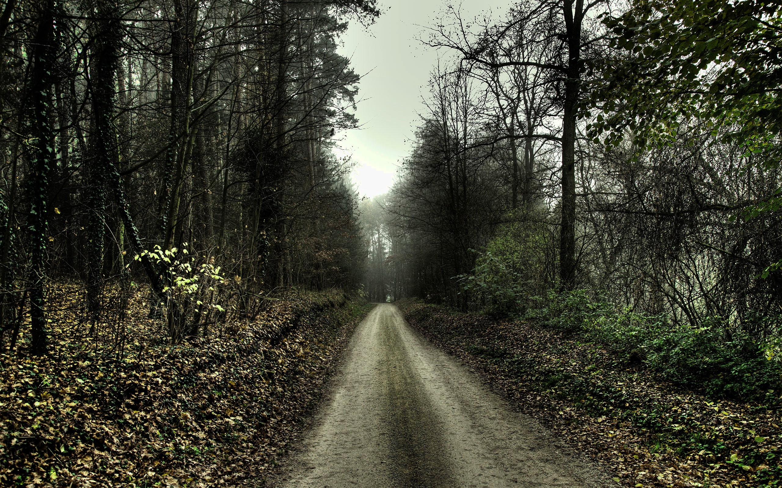 Lonely Autumn Road