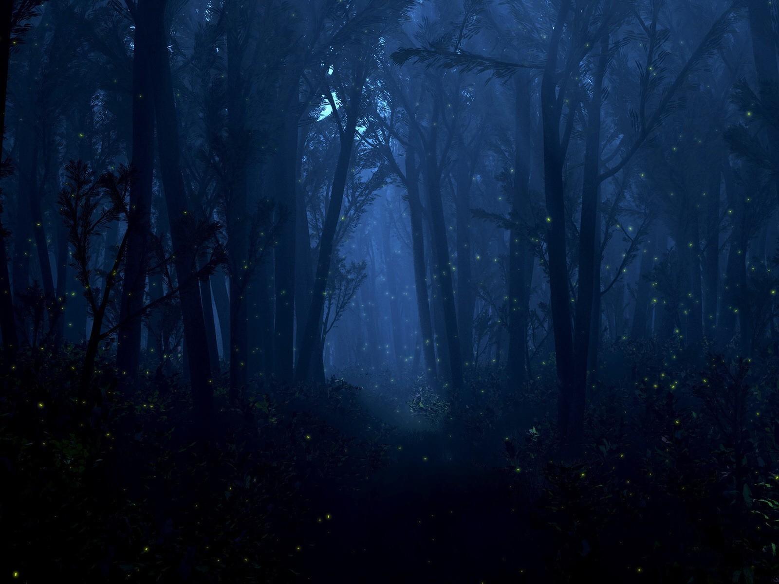 Обои Множество светлячков в темном лесу ночь, рисунки, 1680х1050