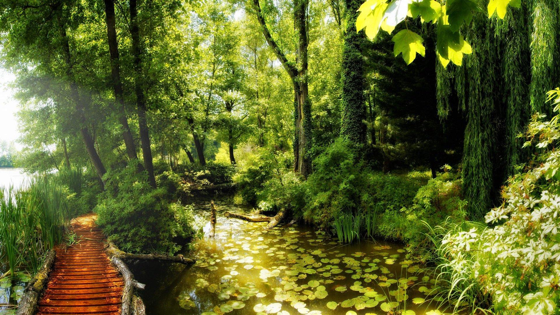 Path In The Forest Desktop Wallpaper