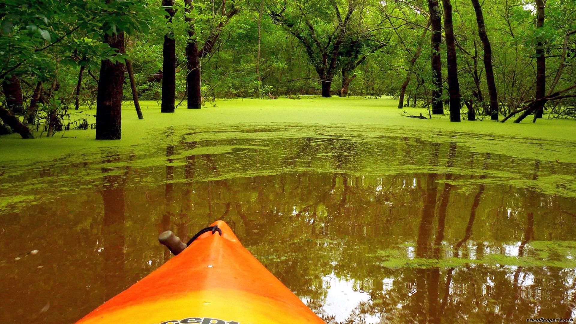 Hd wallpaper nature green - Green Nature Wallpaper Hd Desktop Wallpaper