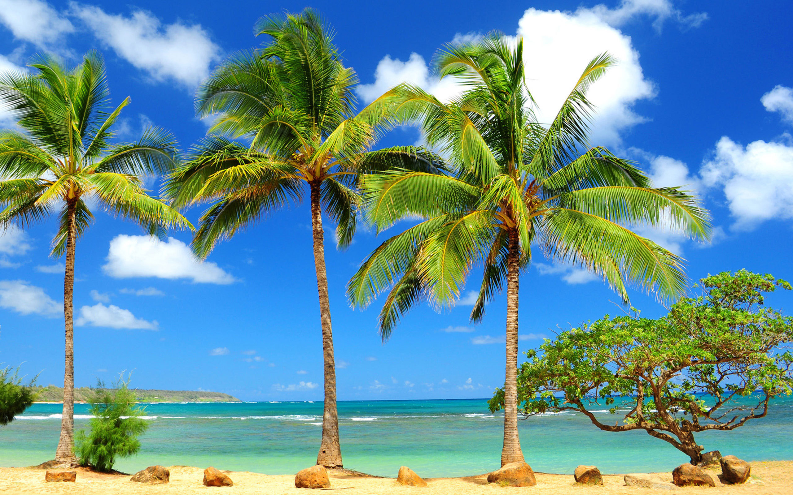 hd wallpapers palm trees desktop wallpaper