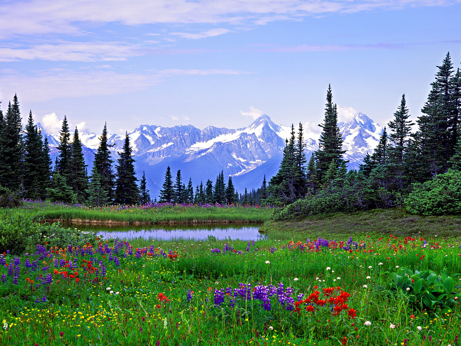 Alpine Wildflowers Rocky Mountains British Columbia Flowers