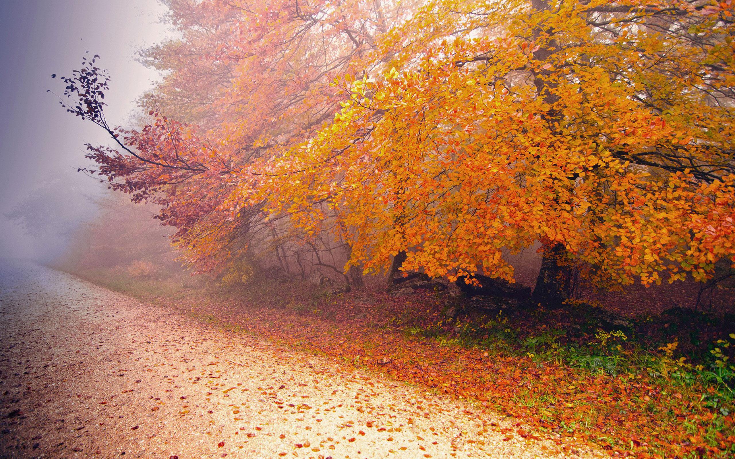 туманная осень 2