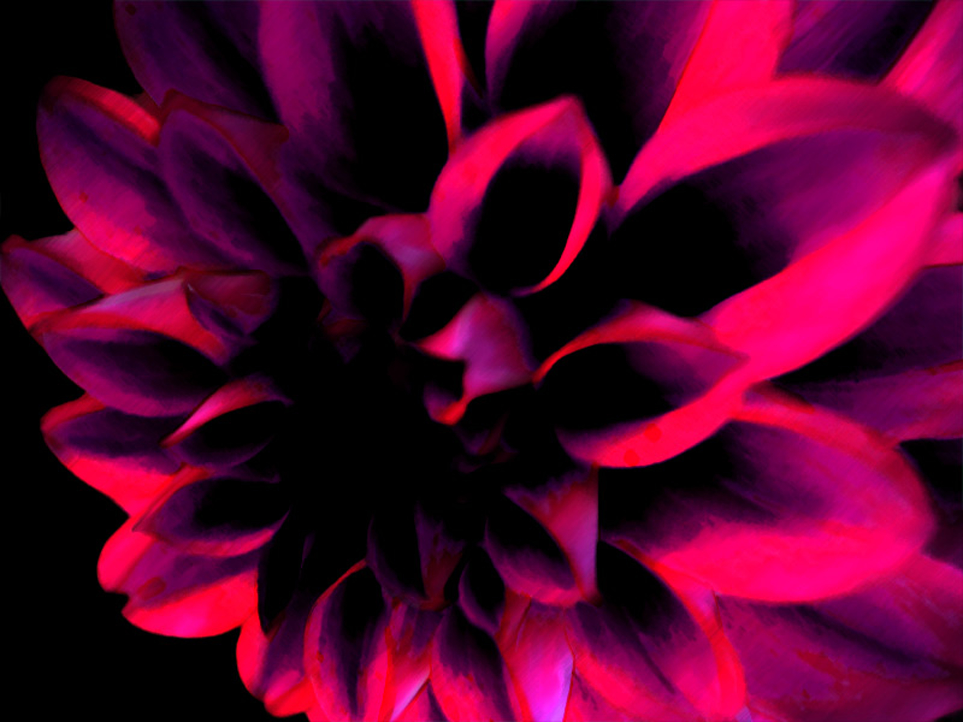 dark pink flower by hanna h desktop wallpaper