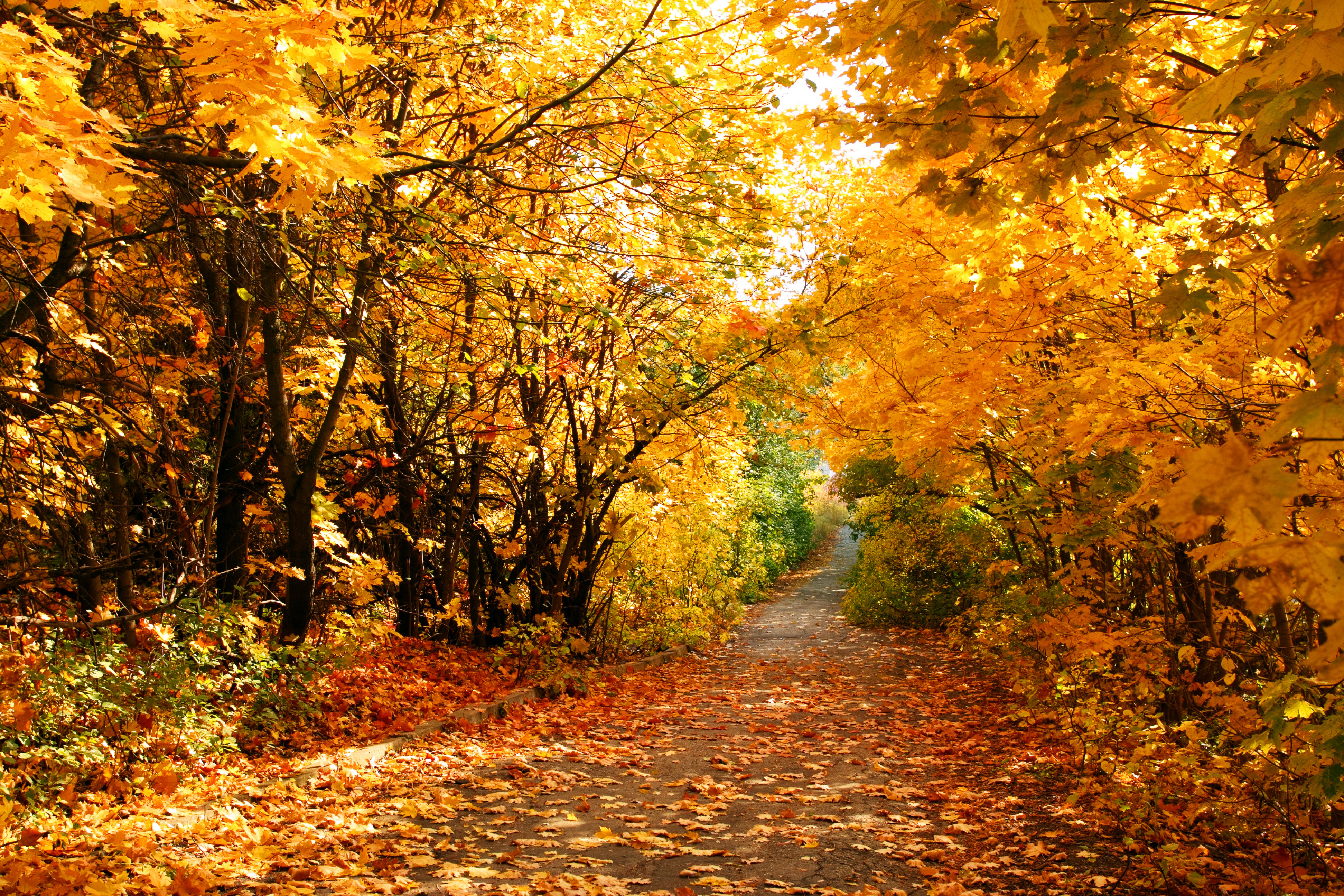 Photo Collection Wallpapers Late Autumn Seasonal