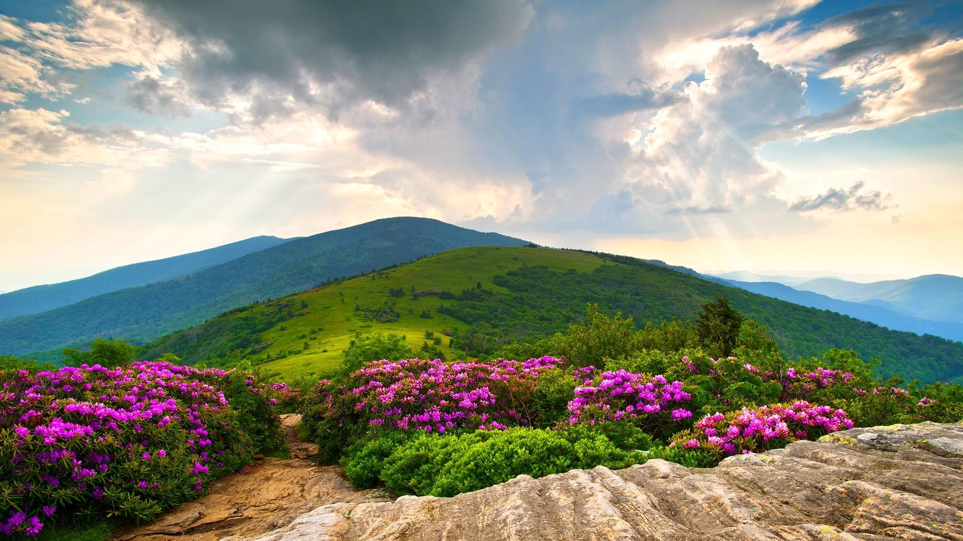 Beautiful Wallpaper Mountain Flower - 71647-1920x1080  Perfect Image Reference_85632.jpg