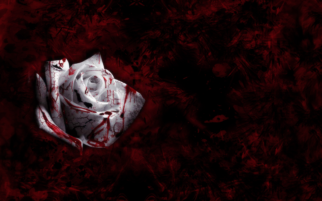 Blood Rose by BuckFutter - Desktop Wallpaper